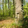 Naturwald Braken
